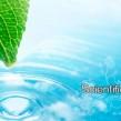Organic Ayurvedic Herbs